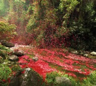 check-out-nick-meeks-photographs-of-costa-rica-covered-in-flowers-for-sony-2